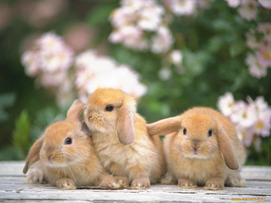 фото с тремя зайцами могут